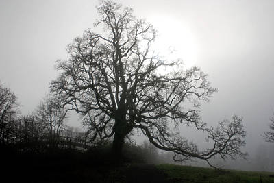 Photograph - Foggy Morning Oak by Craig Strand