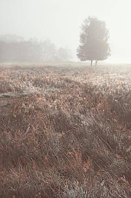 Photograph - Foggy Morning On Scottish Fields by Jenny Rainbow