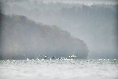 Photograph - Foggy Morning On The Lake by Dan Friend