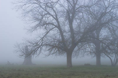 Foggy Morning Art Print by Randy Bayne