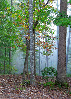 Photograph - Foggy Morning by Rosie Brown