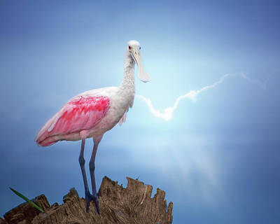 Foggy Morning Spoonbill Art Print