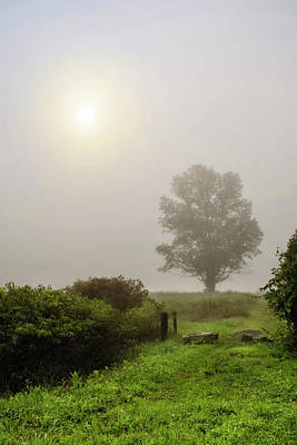 Photograph - Sunrise Tree In Morning Fog by Christina Rollo