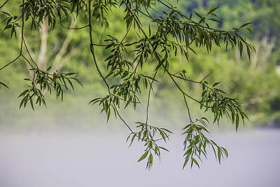 Photograph - Foggy Morning Tree by Paula Porterfield-Izzo