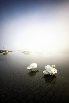 Foggy Morning View Near Bridge With Two Swans At Vltava River, Prague, Czech Republic Art Print