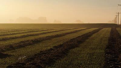 Foggy Morning Windrows Art Print