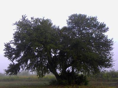 Photograph - Foggy Oak Tree  by Chris Mercer