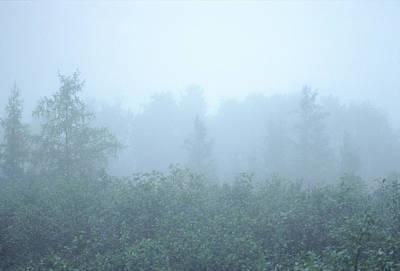 Photograph - Foggy Perspective by Bernard Lynch