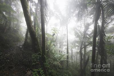 Foggy Rainforest Hike 1 Art Print by Ernesto Ruiz