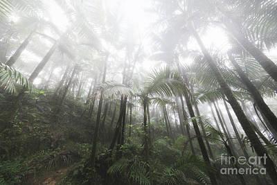 Foggy Rainforest Hike 2 Art Print by Ernesto Ruiz