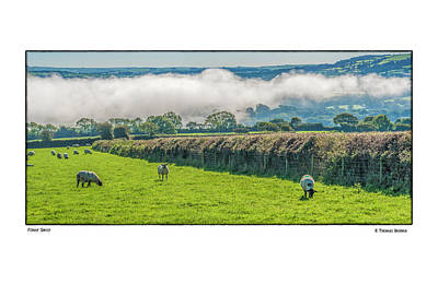 Photograph - Foggy Sheep by R Thomas Berner