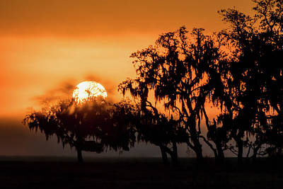 Photograph - Foggy Southern Sunrise by Dawn Currie