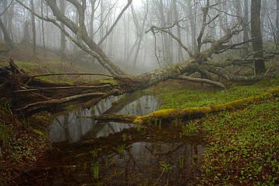 Foggy Spring Forest Art Print by Irwin Barrett