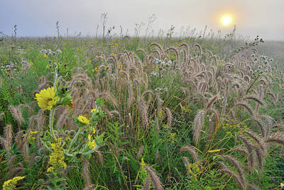 Travel - Foggy Sunrise on Praire of Foxtail Grasses and Sunflowers by Ray Mathis