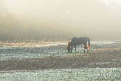 Photograph - Foggy Sunrise by Sari ONeal
