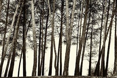 Foggy Sunrise Trees Bw Art Print
