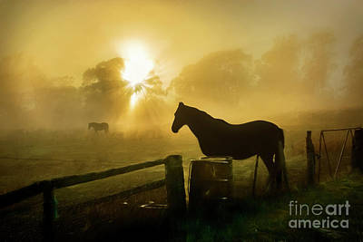 Photograph - Foggy Sunrise With Horses by Stuart Row