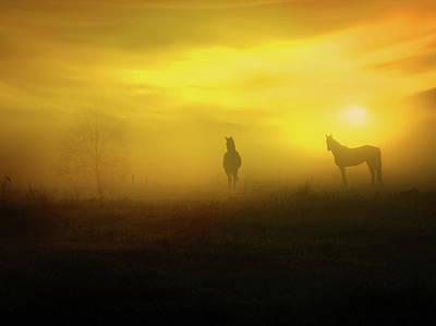 Photograph - Foggy Sunset by Lilia D