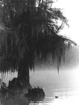 Photograph - Foggy Swamps by Joy Tudor