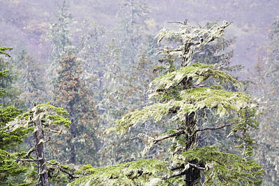 Foggy Tongass Rain Forest Art Print by Eggers Photography