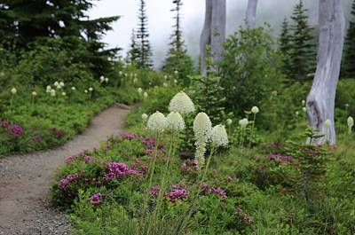 Photograph - Foggy Trail Amongst Beargrass by Lynn Hopwood