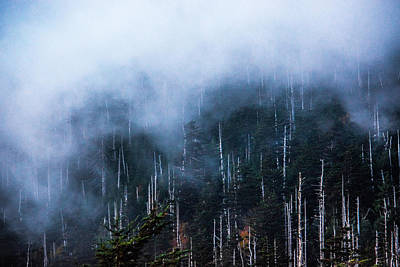 Photograph - Foggy Tranquility by Shelby Young