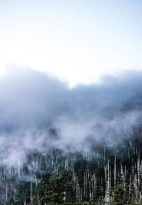 Photograph - Foggy Tranquility Vertical by Shelby Young
