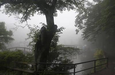Photograph - Foggy Tree by Masami Iida