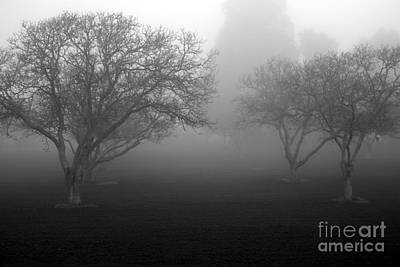 Photograph - Foggy Trees by Balanced Art