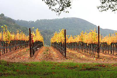 Central Coast Winery Photograph - Foggy Vineyard by Art Block Collections