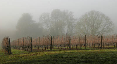 Photograph - Foggy Vineyard by Jean Noren
