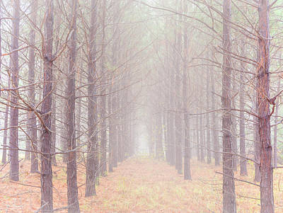 Photograph - Foggy Walk  by Phil Rispin