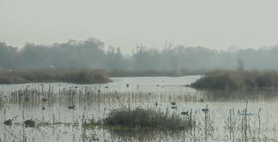 Foggy Wetlands Art Print