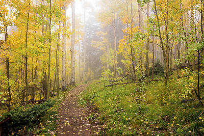 Photograph - Foggy Winsor Trail Aspens In Autumn - Santa Fe National Forest New Mexico by Brian Harig