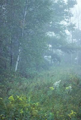 Photograph - Foggy Wooded Meadow by Bernard Lynch