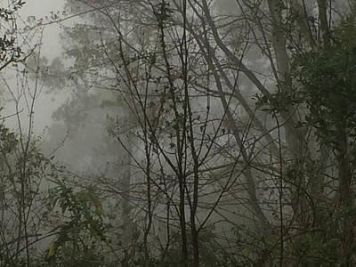 Foggy Woods Photo  Art Print