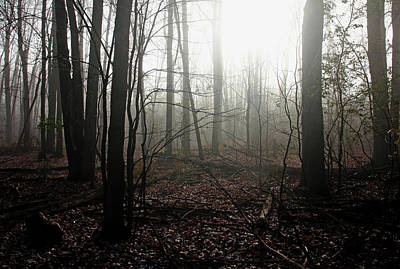 Photograph - Foggy Woods In Fall by Debbie Oppermann