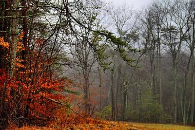 Photograph - Foggy Woods by Kathryn Meyer