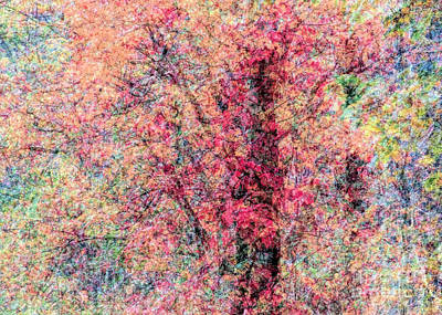 Photograph - Foliage Composite  by Janice Drew