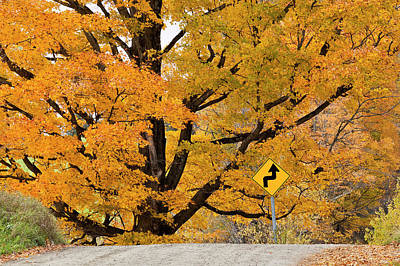 Photograph - Foliage Directions by Alan L Graham