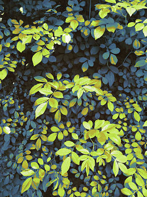 Digital Art - Foliage Hues - Dark Blue And Green by Shawna Rowe
