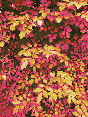 Digital Art - Foliage Hues - Orange And Pink by Shawna Rowe