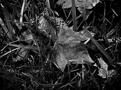 Case Photograph - Foliage In The Grass by Frank J Casella