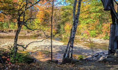 Photograph - Foliage by Jane Luxton