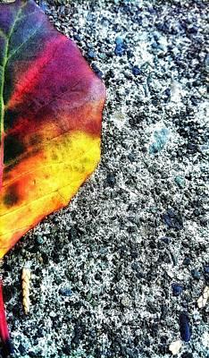 Photograph - Foliage Leaf by Eddie G