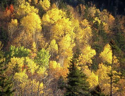 Photograph - Foliage Mount Katahdin by John Burk
