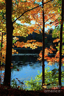 Photograph - Foliage By The Nashua River by Anita Pollak