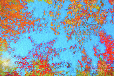 Photograph - Foliage On Fire by Sharon Seaward