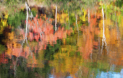 Photograph - Foliage Reflection by Michael Blanchette
