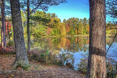 Photograph - Foliage Through The Trees by Jane Luxton